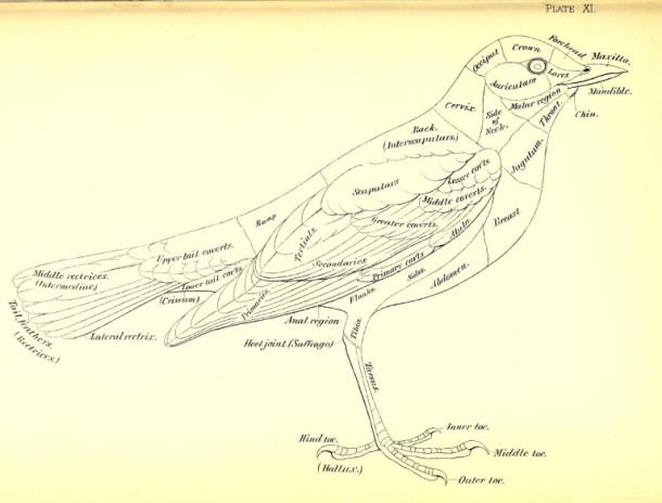 Pantone bird based color system mardikian